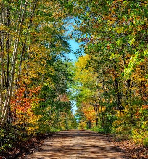 Ilmainen kuvapankkikuva tunnisteilla lehdet, putoaminen, syksyn lehdet, värit