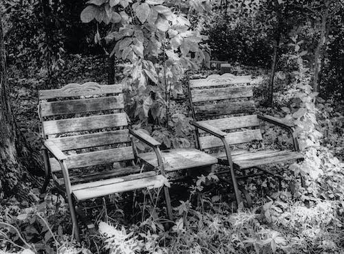 デッキチェア, 森の中, 椅子2脚の無料の写真素材
