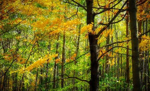 秋, 紅葉, 色落ちの無料の写真素材