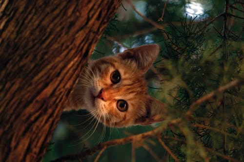 Free stock photo of cat, cute, forest, hide