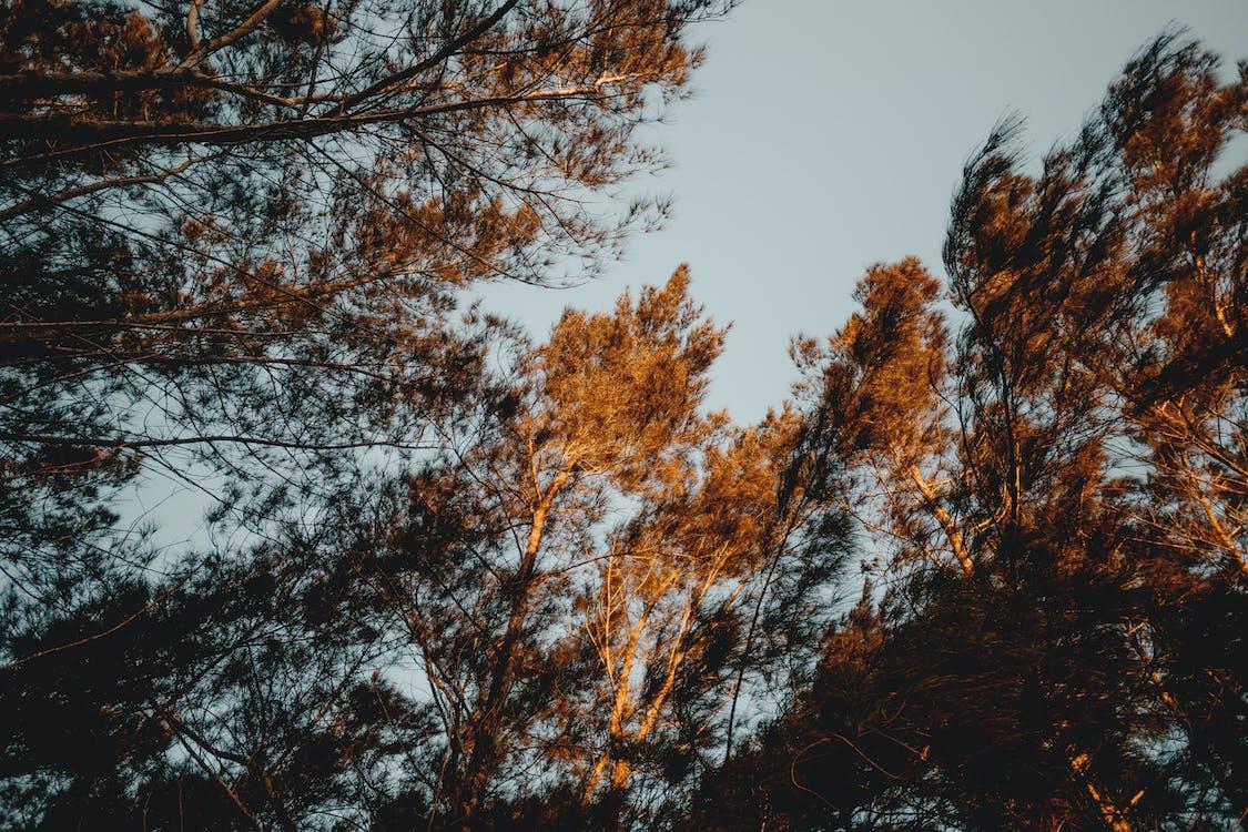 fák, perspektíva, természet
