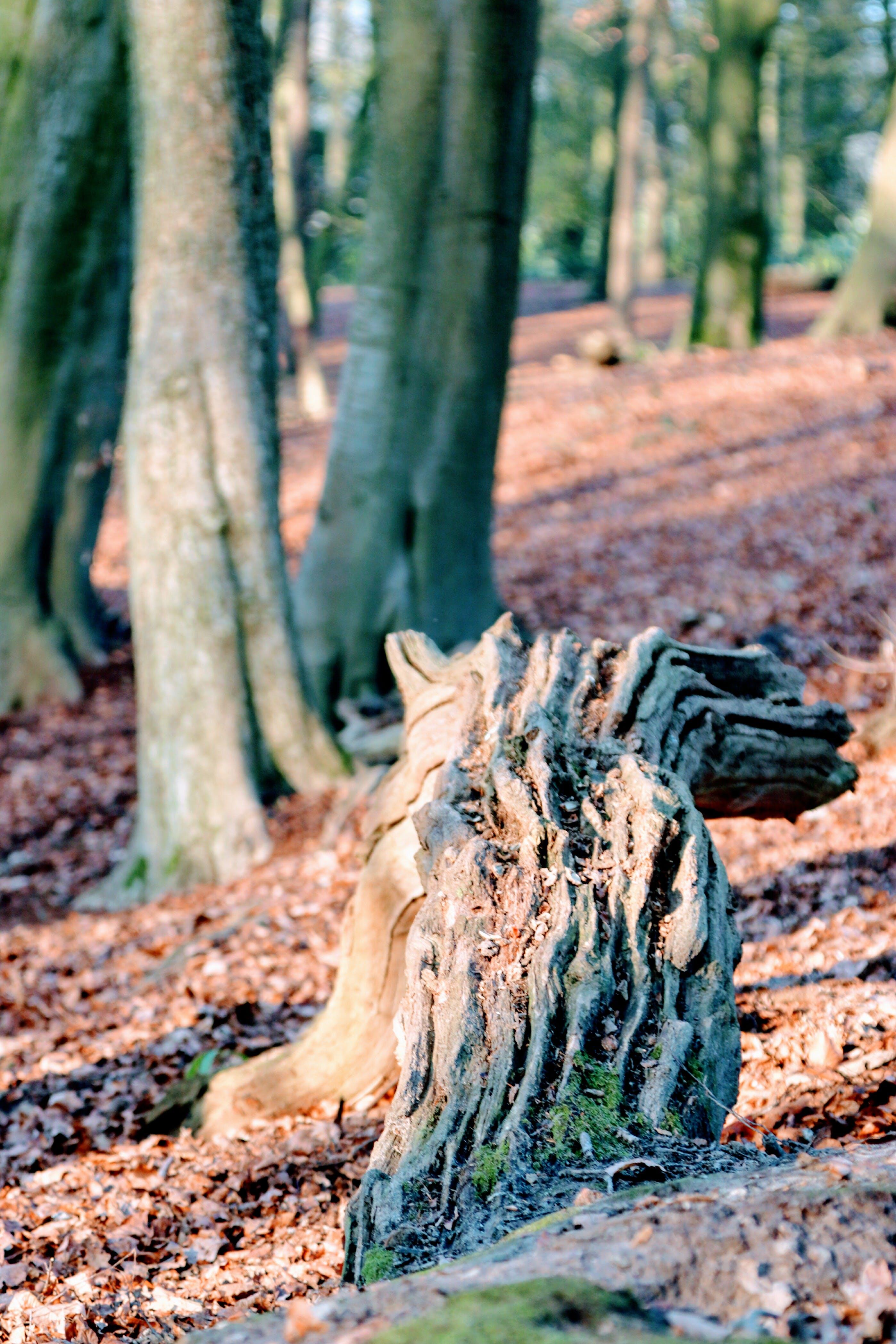 Free stock photo of log