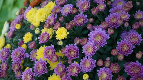 Free stock photo of bouquet, bouquet of flowers, campus martius, detroit