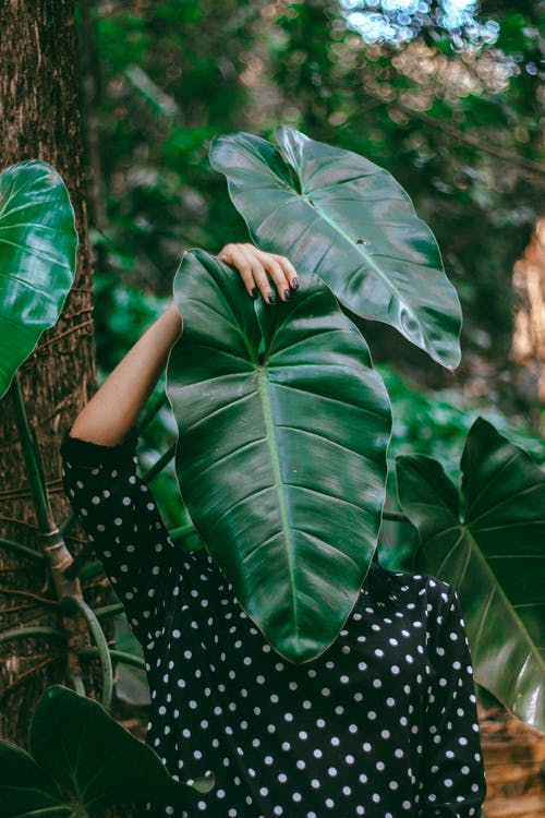 Person Covering Face With Huge Green Leaf