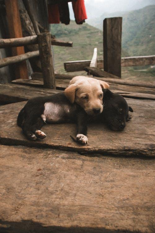 Безкоштовне стокове фото на тему «dos, luzon, милий, милий собака»
