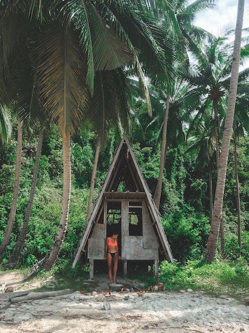亞洲, 島, 巴拉望, 愛妮島 的 免費圖庫相片