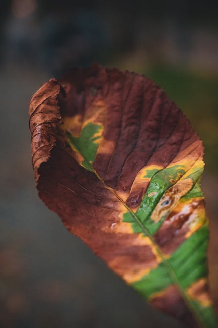 Close up photo of green and brown leaf