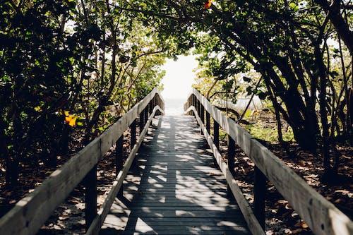 Darmowe zdjęcie z galerii z cień, drzewo, most, plaża