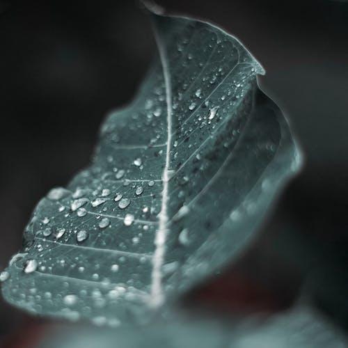 Photos gratuites de feuilles, gouttes, pluie