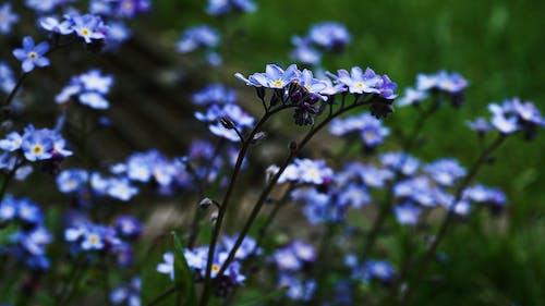 Bahçe, bitkiler, Çiçekler, çiçekli içeren Ücretsiz stok fotoğraf
