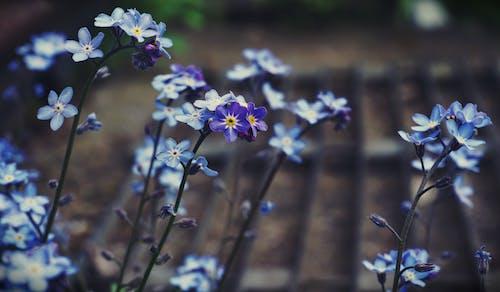 Bahçe, bitkiler, Çiçekler, doğa içeren Ücretsiz stok fotoğraf