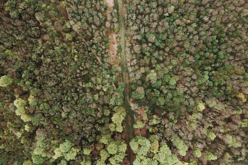 คลังภาพถ่ายฟรี ของ จากข้างบน, ต้นไม้, ป่า, ภาพถ่ายทางอากาศ