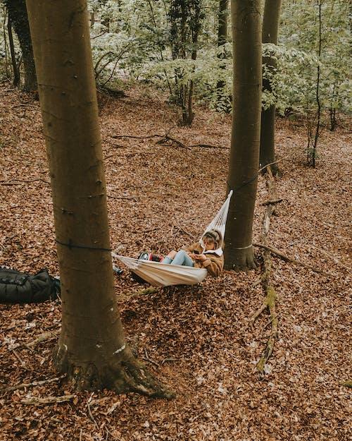 คลังภาพถ่ายฟรี ของ กลางแจ้ง, ตก, ต้นไม้, นอน