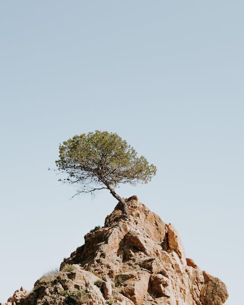 경치, 나무, 높은, 바위의 무료 스톡 사진