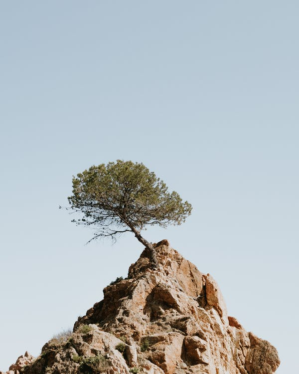 Tree on Top Of A Mountain