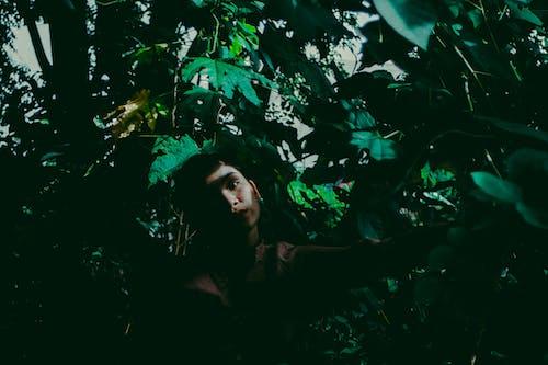 Безкоштовне стокове фото на тему «вродлива, дерева, дерево, жінка»