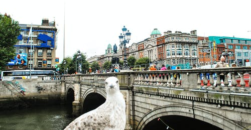 Free stock photo of dublin, seagull