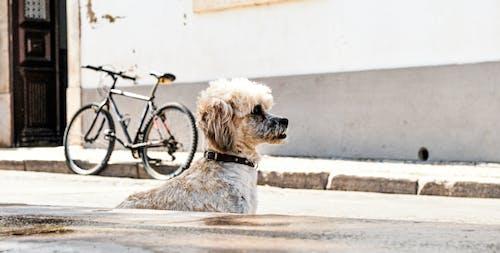 Gratis arkivbilde med #dog