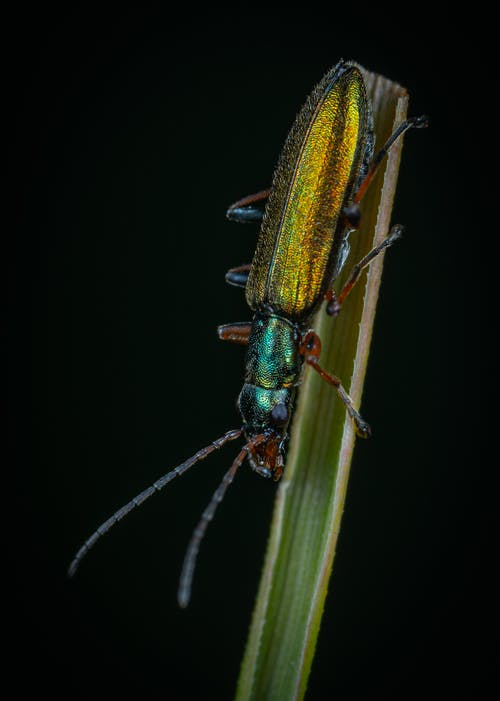 Close-Up Photo of Beetle