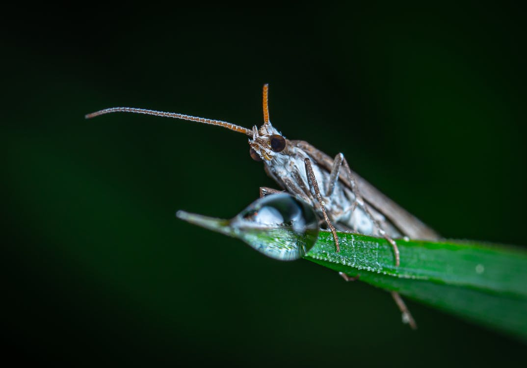 bướm đêm, cận cảnh, chụp ảnh côn trùng