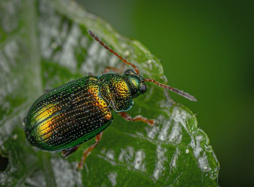 Close-Up Photography of Green and Black Insect