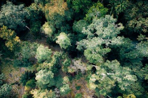Fotobanka sbezplatnými fotkami na tému les, lesy, letecký záber, pohľad zvtáčej perspektívy