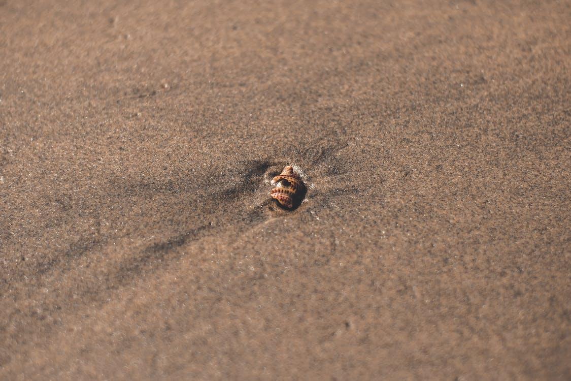 ακτή, άμμος, αμμώδης