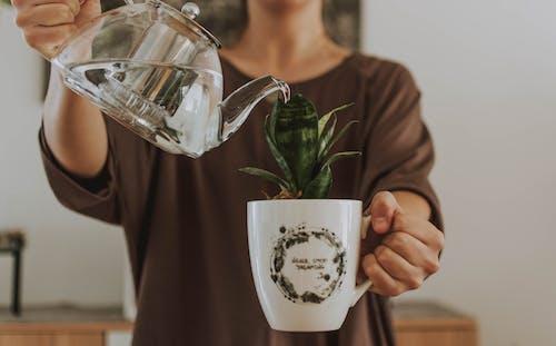 Imagine de stoc gratuită din cană, ceainic, plantă, udare