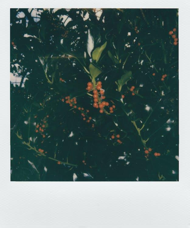 Round Orange Fruit