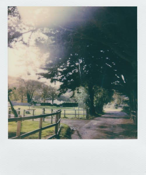 Fotos de stock gratuitas de al aire libre, arboles, carretera, cerca