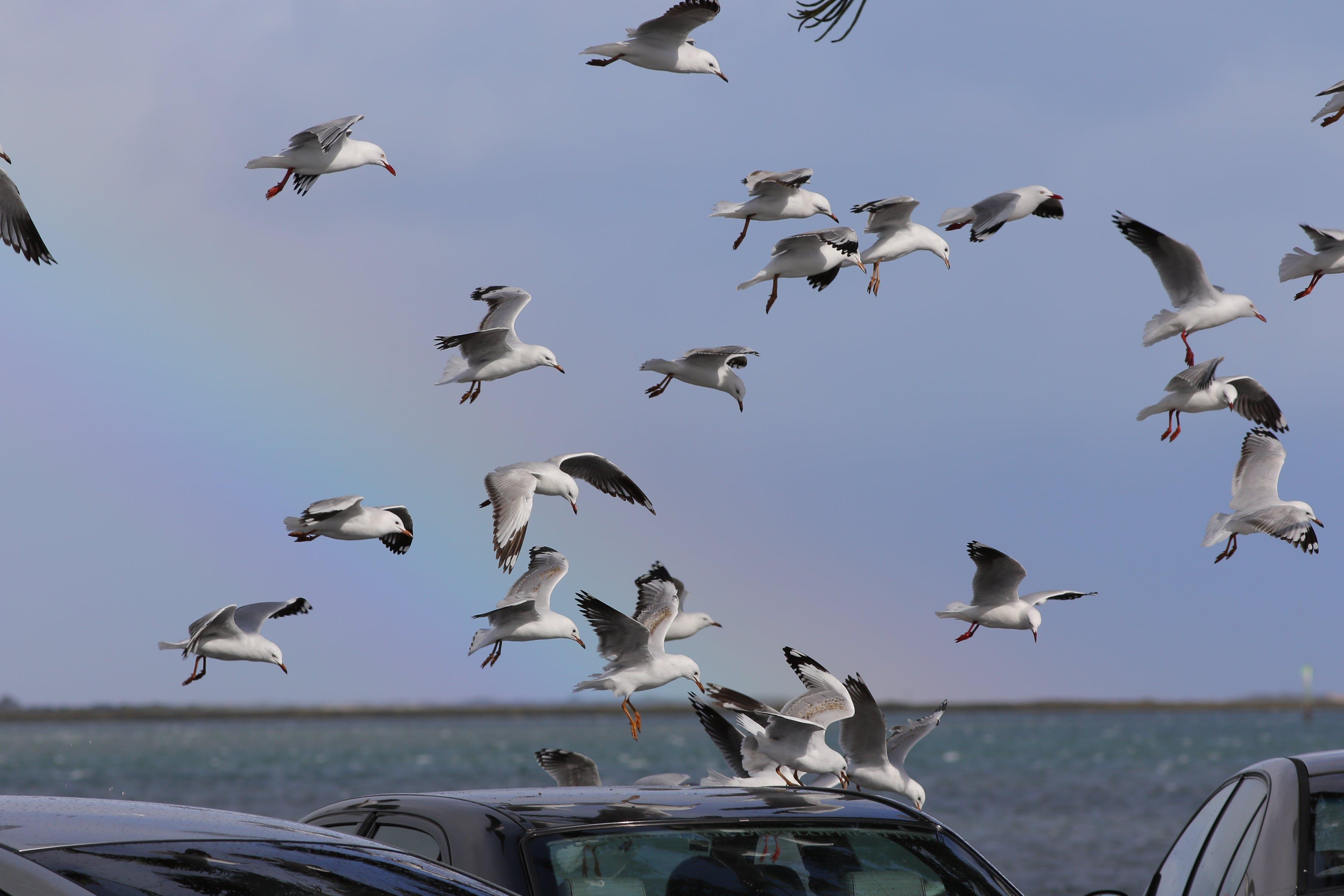 Free stock photo of birds, rainbow, seagulls