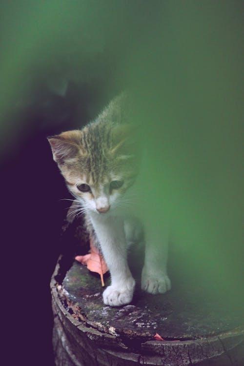 akcja kota, fotografia zwierzęcia, kot