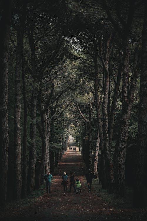 People Walking on Dirt Road Between Trees