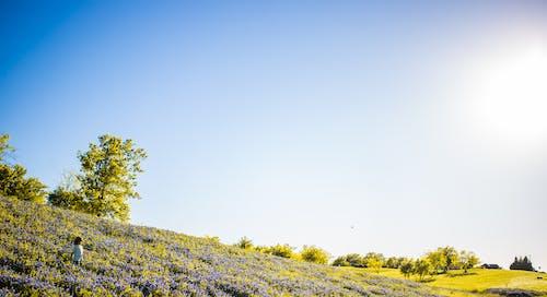 Gratis lagerfoto af bakke, bane, dagslys, græs