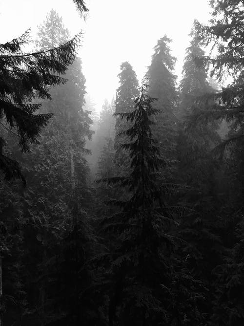 Photo of Forest Surrounded With Fog