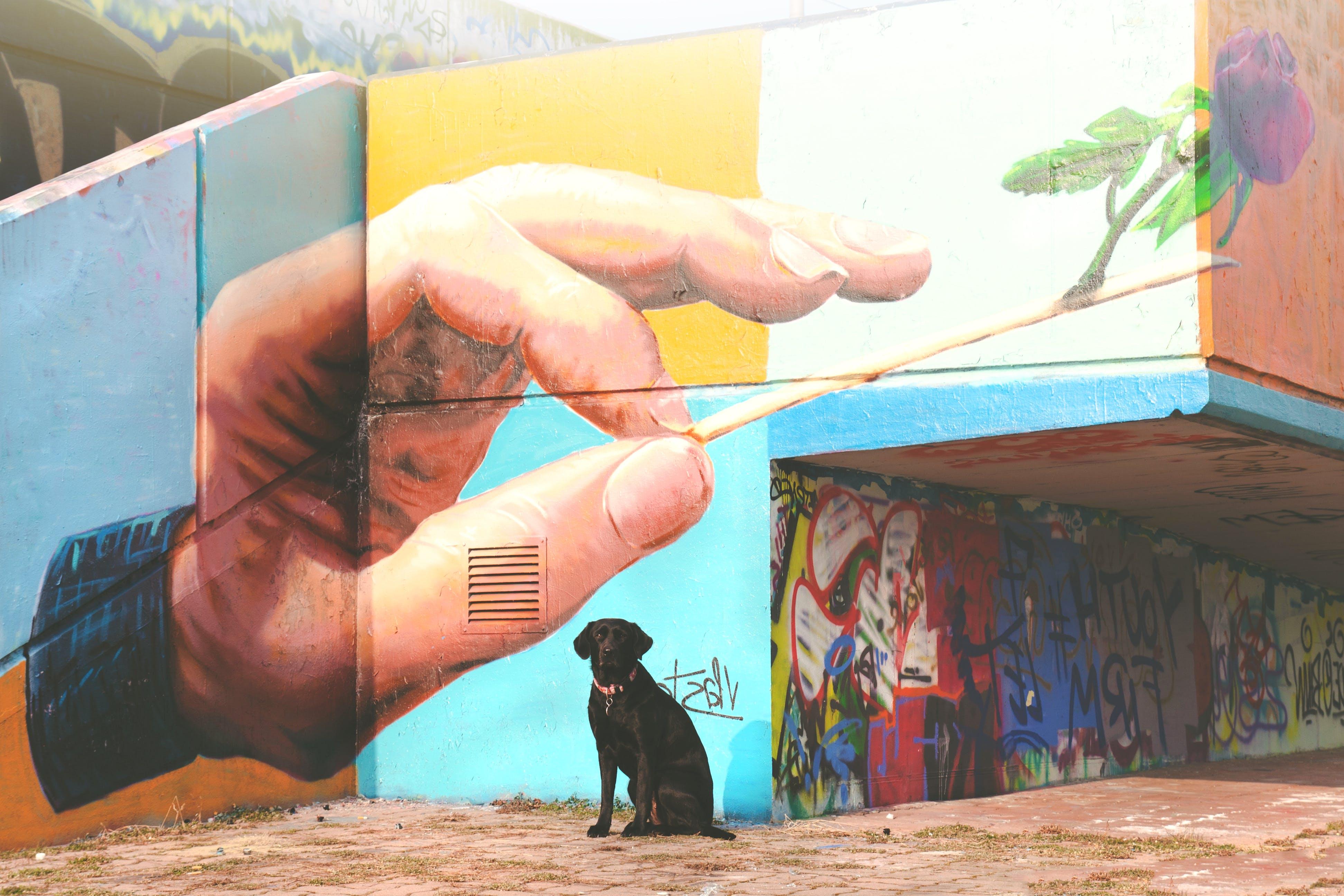 Short-coated Black Dog Sitting Near Wall Arts