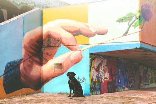 Základová fotografie zdarma na téma akce, barevný, barva, budova