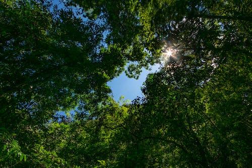 Foto stok gratis alam, hutan, hutan hitam, keindahan di alam