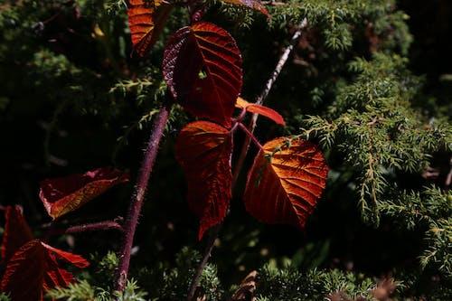 Δωρεάν στοκ φωτογραφιών με βάτος, όμορφος, φθινόπωρο, φύλλο