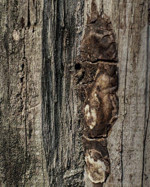 Fotobanka sbezplatnými fotkami na tému drevené detaily, hnedá, les, lesy