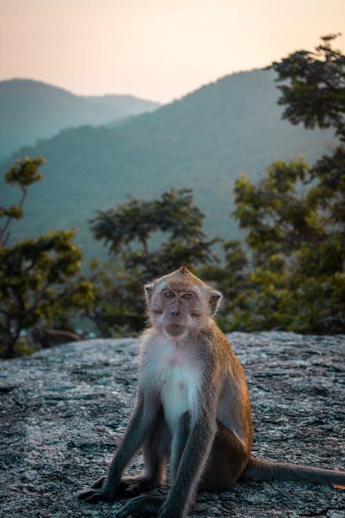 dağlar, doğa, gün batımı, hayvan içeren Ücretsiz stok fotoğraf