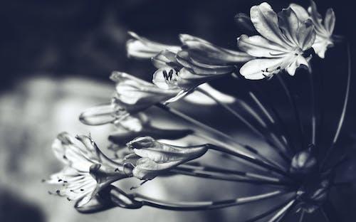 Bahçe, Çiçekler, çiçekli, doğa içeren Ücretsiz stok fotoğraf