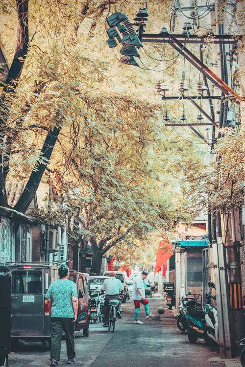 Imagine de stoc gratuită din alee, arbori, asiatici, călătorie