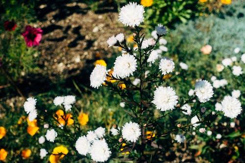 Δωρεάν στοκ φωτογραφιών με ανθισμένη χλωρίδα, άνθος, ηλιακό φως, καλοκαίρι