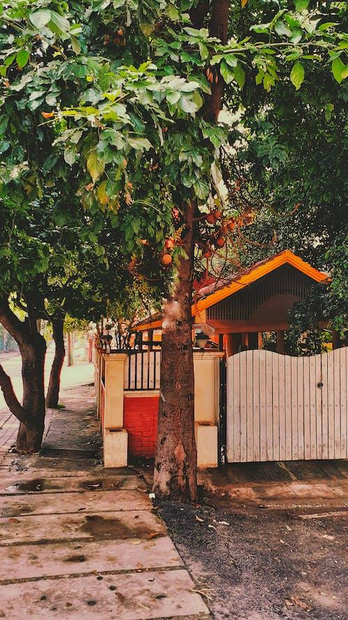 Ingyenes stockfotó fák, India, indiai ház, indiai utcák témában