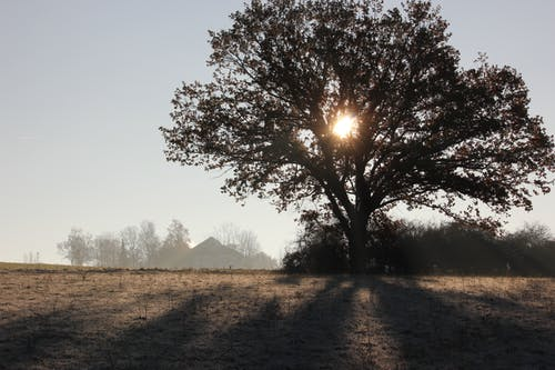Free stock photo of early morning, foggy morning, good morning