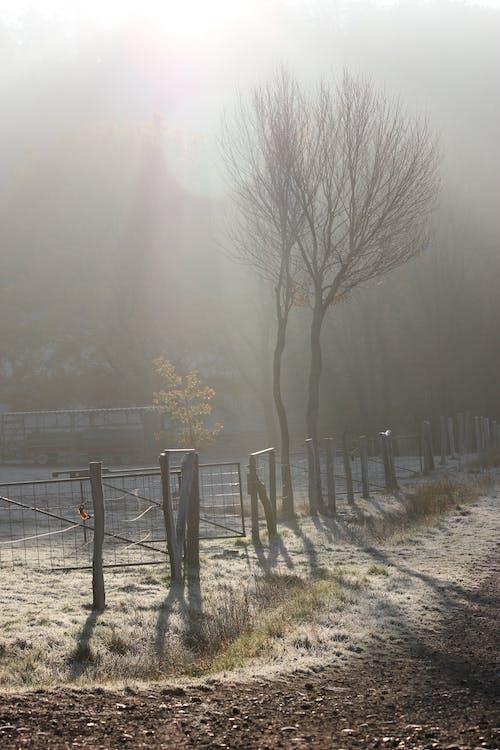 Free stock photo of autumn, fence, fog
