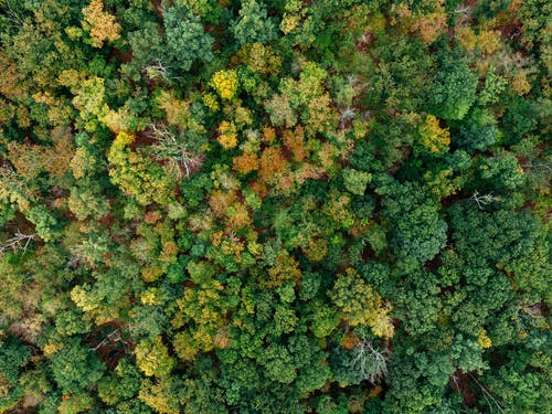 Aerial Photography of Green-red-and-yellow-leafed Trees