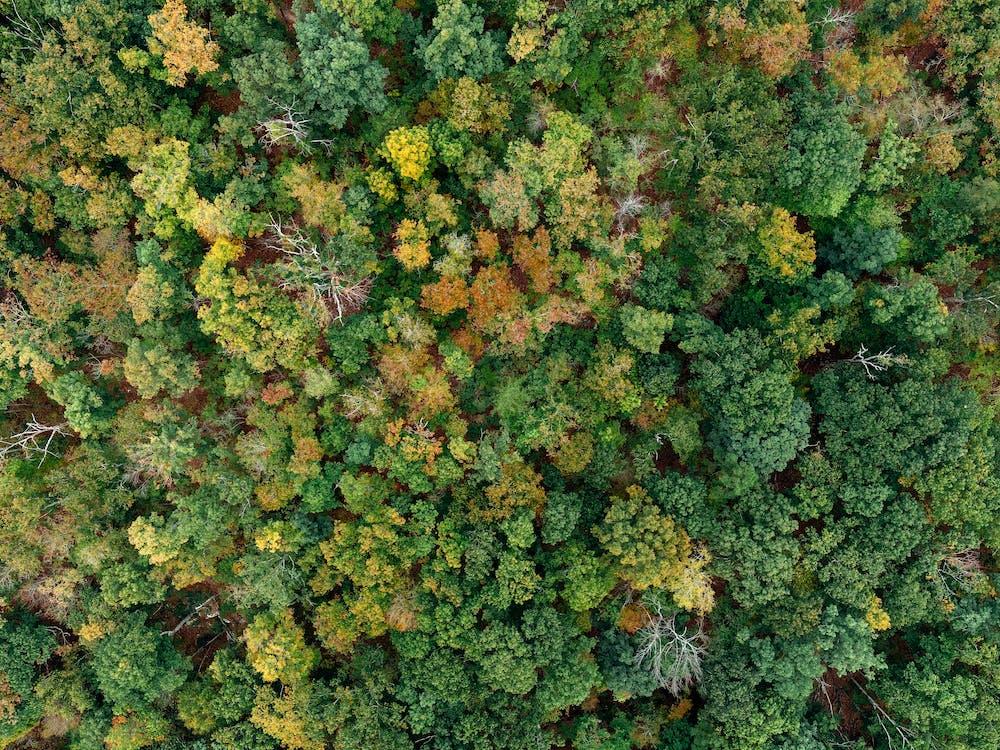 bird's eye view, bladeren, boerderij