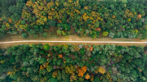 Road Between Green Trees High-angle Photography